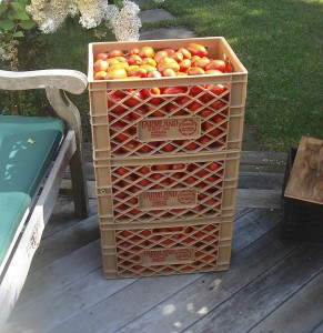 tomatoes ready for washing