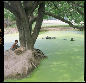 indian kid w water buffalo