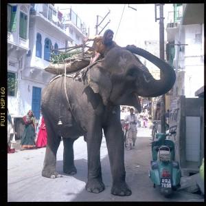 street_elephant