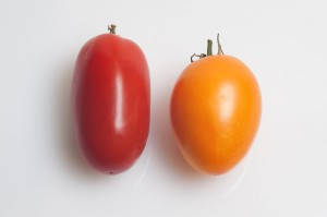 red_yellow tomatoes